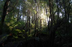 3.Floresta